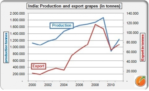 India production export grapes druiven